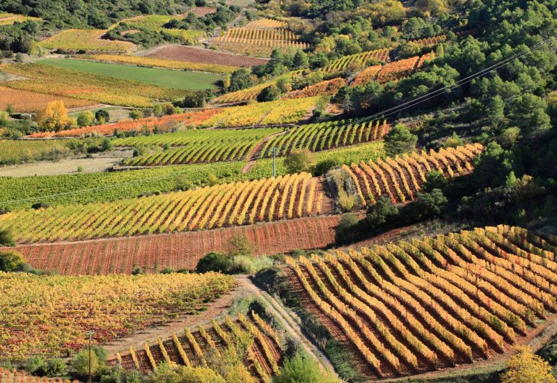 Les Vignoble de Saint Chinian dans 45 minutes chez La Villa de Mazmet