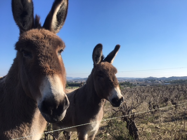Domaine de deux Anes donkeys